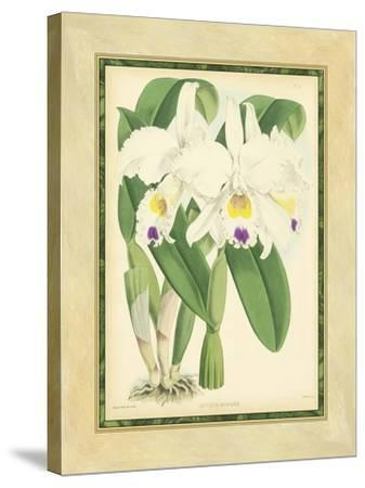 Fitch Orchid III-J^ Nugent Fitch-Stretched Canvas Print