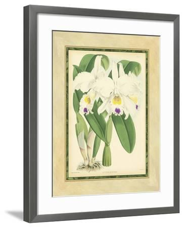 Fitch Orchid III-J^ Nugent Fitch-Framed Art Print