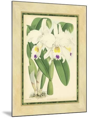 Fitch Orchid III-J^ Nugent Fitch-Mounted Art Print