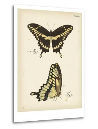 Butterfly Profile I-Vision Studio-Metal Print