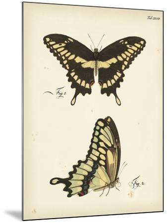 Butterfly Profile I-Vision Studio-Mounted Art Print