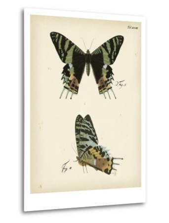 Butterfly Profile IV-Vision Studio-Metal Print