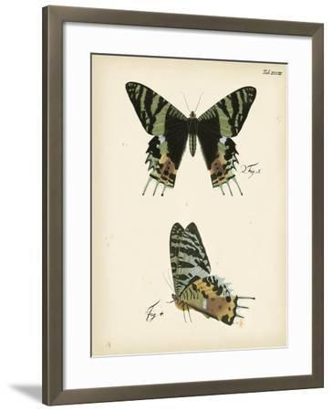 Butterfly Profile IV-Vision Studio-Framed Art Print