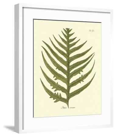 Antique Fern VIII-Vision Studio-Framed Art Print