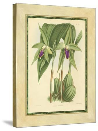 Fitch Orchid VI-J^ Nugent Fitch-Stretched Canvas Print