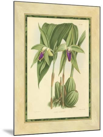 Fitch Orchid VI-J^ Nugent Fitch-Mounted Art Print