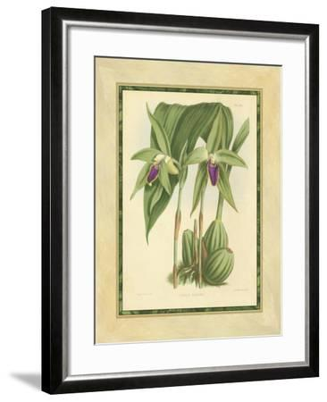 Fitch Orchid VI-J^ Nugent Fitch-Framed Art Print