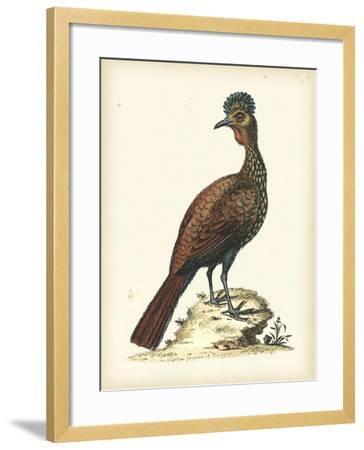 Regal Pheasants V-George Edwards-Framed Art Print