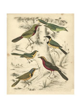 Avian Habitat III-Milne-Framed Art Print