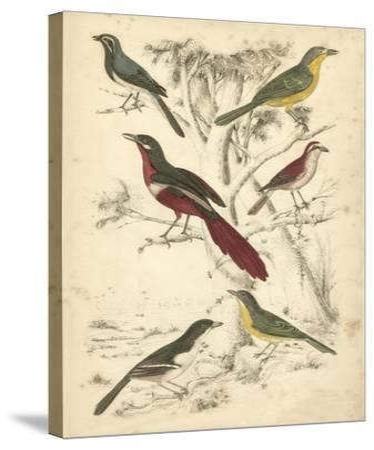 Avian Habitat IV-Milne-Stretched Canvas Print
