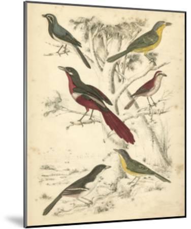 Avian Habitat IV-Milne-Mounted Art Print