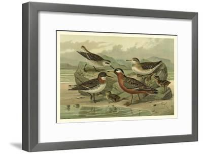 Shore Gathering II-Franz Eugen Kohler-Framed Art Print