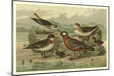 Shore Gathering II-Franz Eugen Kohler-Mounted Art Print