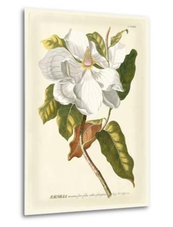 Magnificent Magnolias I-Jacob Trew-Metal Print