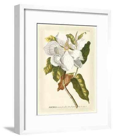 Magnificent Magnolias I-Jacob Trew-Framed Art Print