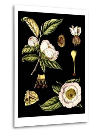 Black Background Floral Studies III-Vision Studio-Metal Print
