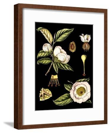 Black Background Floral Studies III-Vision Studio-Framed Art Print