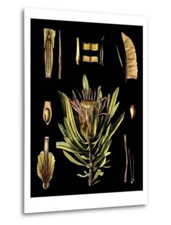 Black Background Floral Studies IV-Vision Studio-Metal Print