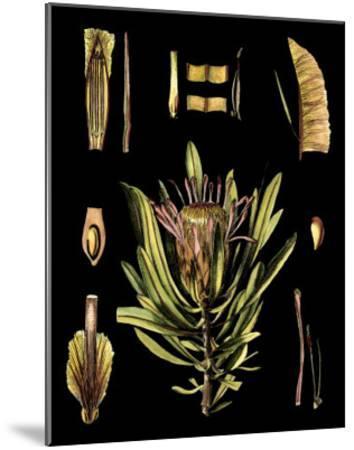 Black Background Floral Studies IV-Vision Studio-Mounted Art Print