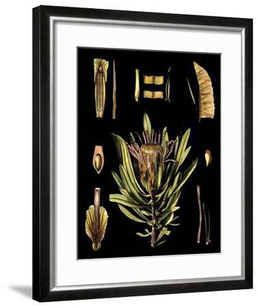 Black Background Floral Studies IV-Vision Studio-Framed Art Print