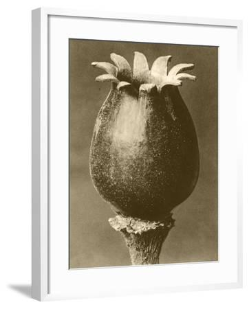 Sepia Botany Study I-Vision Studio-Framed Art Print