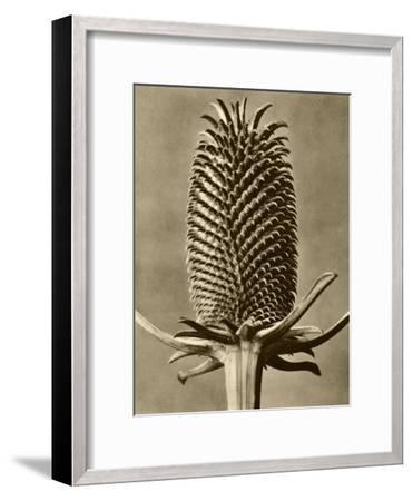 Sepia Botany Study III-Vision Studio-Framed Art Print