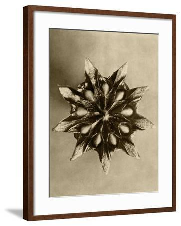 Sepia Botany Study IV-Vision Studio-Framed Art Print