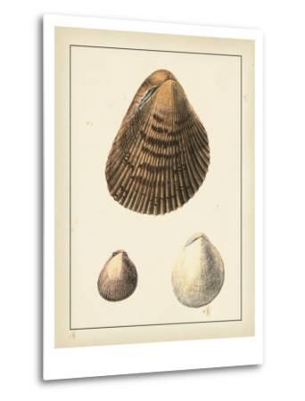 Antique Shells II-Denis Diderot-Metal Print