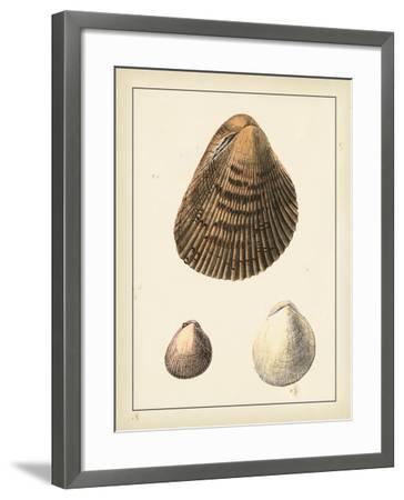 Antique Shells II-Denis Diderot-Framed Art Print