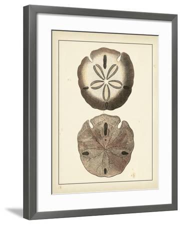 Antique Shells V-Denis Diderot-Framed Art Print