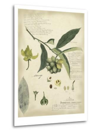 Descube Botanical II-A^ Descube-Metal Print