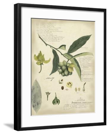 Descube Botanical II-A^ Descube-Framed Art Print