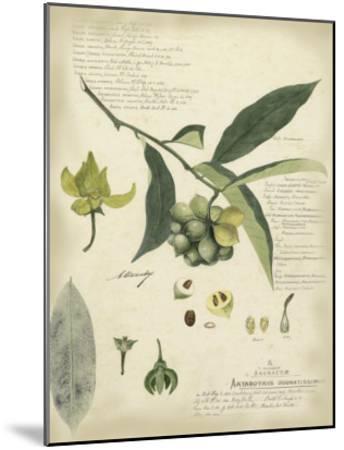 Descube Botanical II-A^ Descube-Mounted Art Print