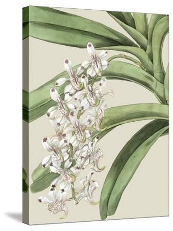 Orchid Blooms I-Vision Studio-Stretched Canvas Print