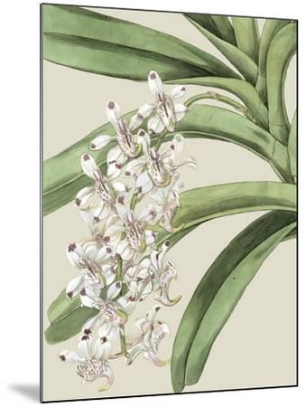 Orchid Blooms I-Vision Studio-Mounted Art Print