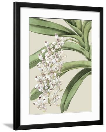 Orchid Blooms I-Vision Studio-Framed Art Print