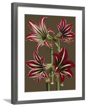 Lush Amaryllis I-Van Houtt-Framed Art Print