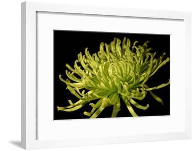 Fuji Mum II-Renee W^ Stramel-Framed Premium Giclee Print