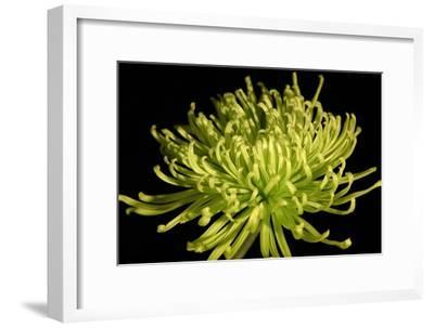 Fuji Mum IV-Renee W^ Stramel-Framed Art Print