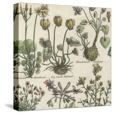 Delicate Garden I-Vision Studio-Stretched Canvas Print