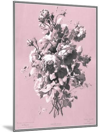 Dussurgey Roses on Pink-Dussurgey-Mounted Art Print