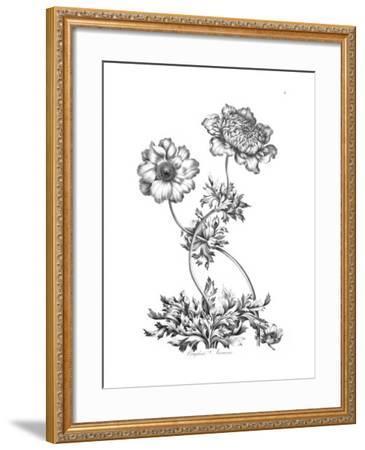 Complete Anemone-Porter Design-Framed Premium Giclee Print