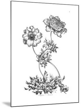 Complete Anemone-Porter Design-Mounted Premium Giclee Print