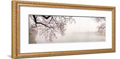 Cherry Blossoms at the Lakeside, Washington DC, USA--Framed Photographic Print