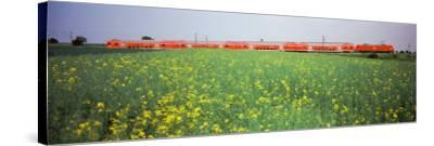 Commuter Train Passing Through Oilseed Rape Fields, Baden-Wurttemberg, Germany--Stretched Canvas Print