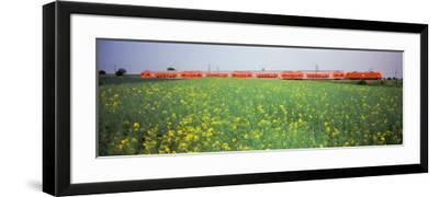 Commuter Train Passing Through Oilseed Rape Fields, Baden-Wurttemberg, Germany--Framed Photographic Print