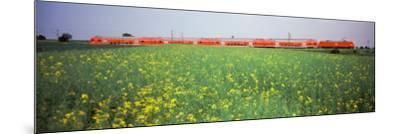 Commuter Train Passing Through Oilseed Rape Fields, Baden-Wurttemberg, Germany--Mounted Photographic Print