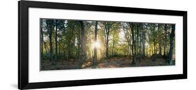 Trees in a Forest, Black Forest, Freiburg Im Breisgau, Baden-Wurttemberg, Germany--Framed Photographic Print