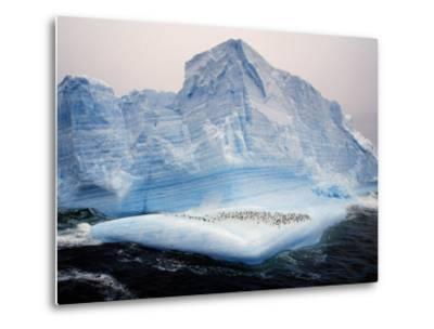 Scotia Sea, Chinstrap Penguins on Iceberg, Antarctica-Allan White-Metal Print