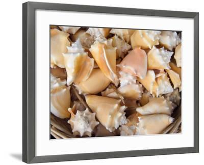 Basket of Sea Shells for Sale at a Shop in St Ives, Cornwall, England-John Warburton-lee-Framed Photographic Print